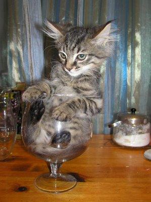 https://odetomyabode.files.wordpress.com/2013/03/funny-cats-glass.jpg